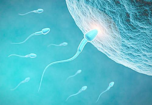 如何阅读精子报告单?