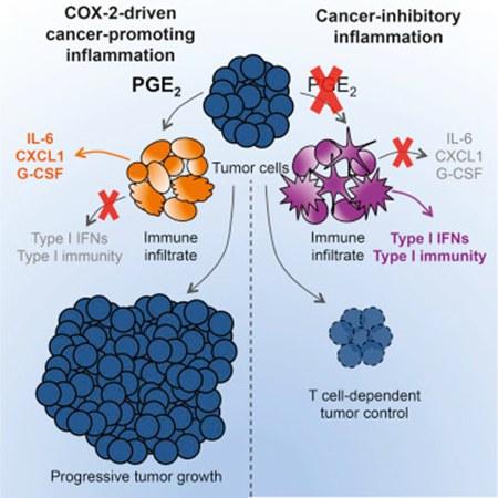 阿司匹林为肿瘤免疫治疗添动力