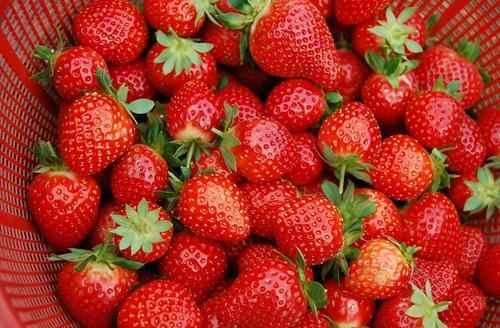 春季养生要多吃草莓