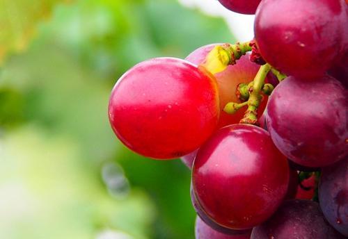 葡萄帮助老年人更好睡眠