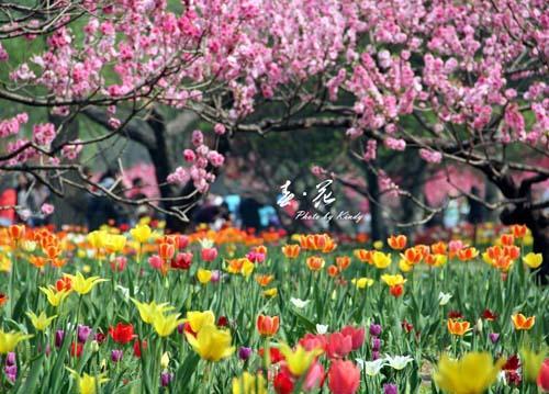 春天来了 如何养肝调气血?
