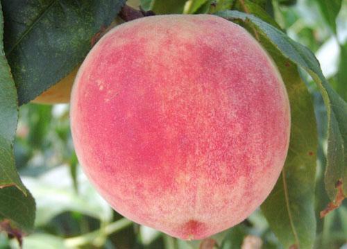 夏季有些水果不宜多吃