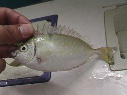 什么是臭鱼症,得了臭鱼症怎么办