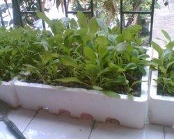 如何在阳台上种菜,怎样种出来才好吃呢