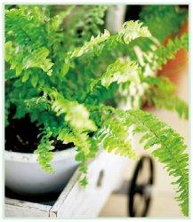 适合在家里养的植物有哪些。六种植物任你挑