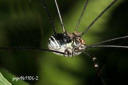 夏天小黑蚊子叮过其痒无比,防治小黑蚊应做好环境卫生