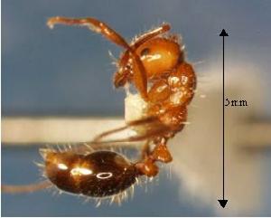 被红火蚁咬了怎么办,如何消灭红火蚁