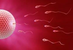厨师职业长期处于高温环境下影响精虫活动力、导致不育
